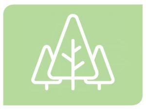 Certificación de gestión forestal